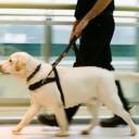 Importância de atender bem deficientes com cão-guia